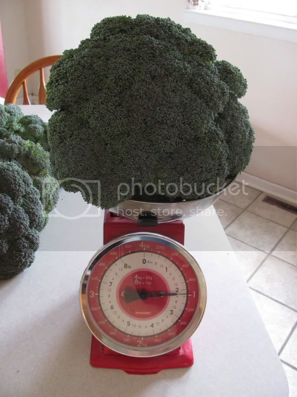 Big Broccoli